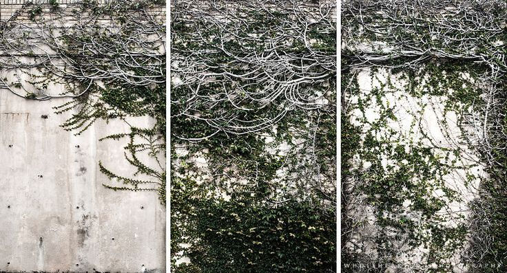 Wall (triptych)
