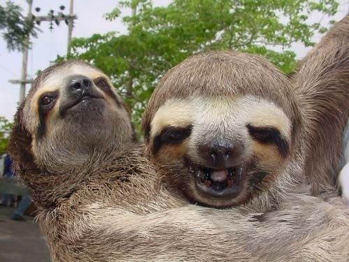A flash of the goodtimes passed through Caesar's mind.   The Story Of The Ides Of March As Told By Sloths