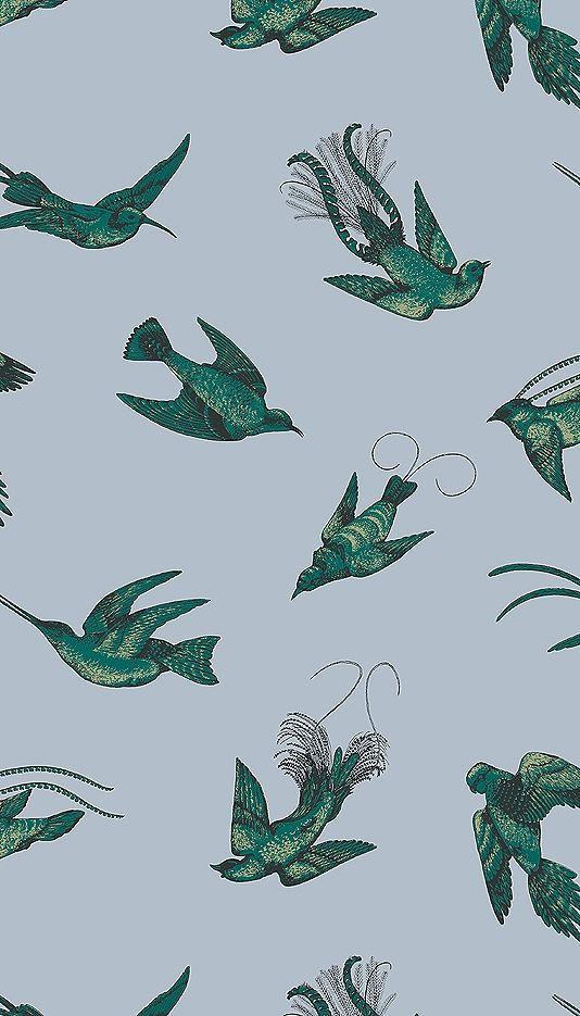 tropical bird wallpaper for walls - photo #42