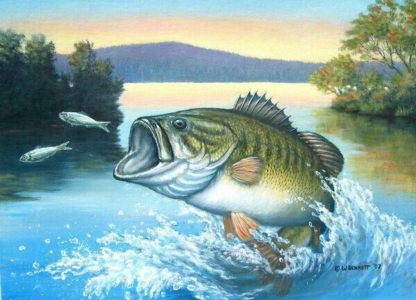 37 best images about bass fishing on pinterest lakes for Bass fishing art