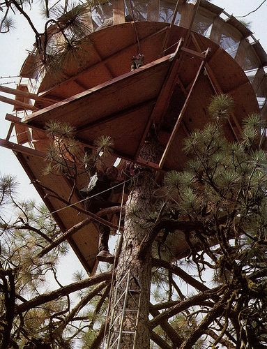 Circular Tree House 168 best best tree houses! images on pinterest | treehouses, live