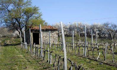 VINO PASSION - cours d'œnologie - Luc Chatain, Sommelier Conseil  A Moidieu-Détourbe, dans une ambiance ludique et conviviale, apprenez à déguster un vin, prenez plaisir à mettre des mots sur vos sensations!!! http://www.vino-passion.com/
