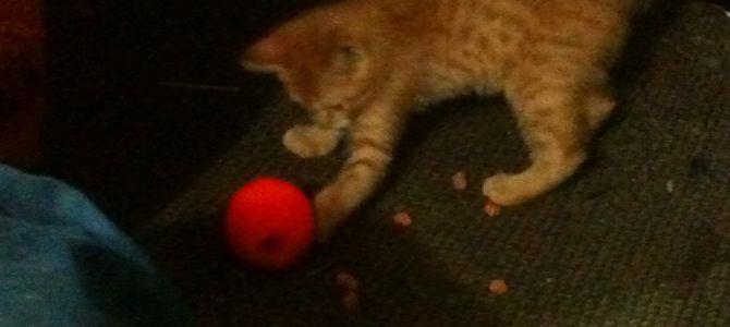 The Purrr-fect Cat Toy!
