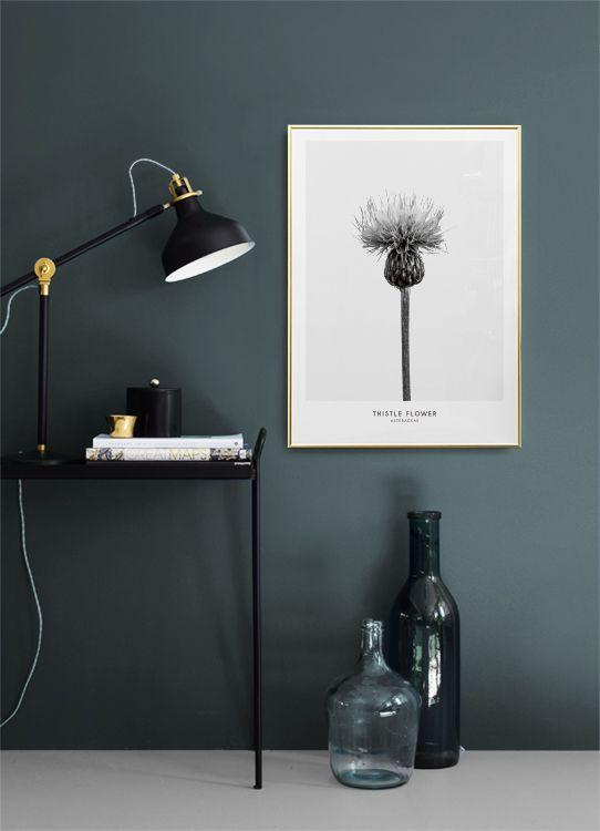 Thistle flower poster...