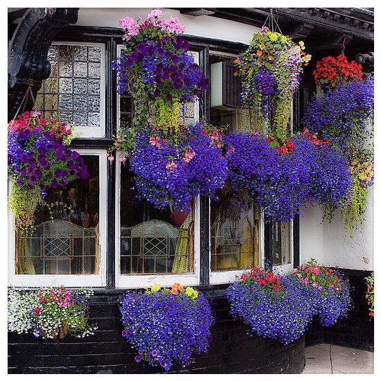 Best Flower Combinations For Hanging Baskets : Best basket combinations images on