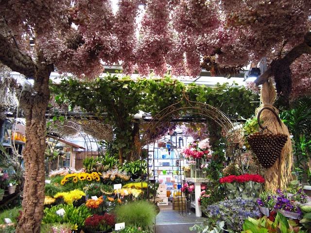 Amsterdam flower market: Amsterdamse Bloemenmarkt, Market Street, Flower Shops, Europe Travel, Flower Markets, Obv Travel, Travel Guide