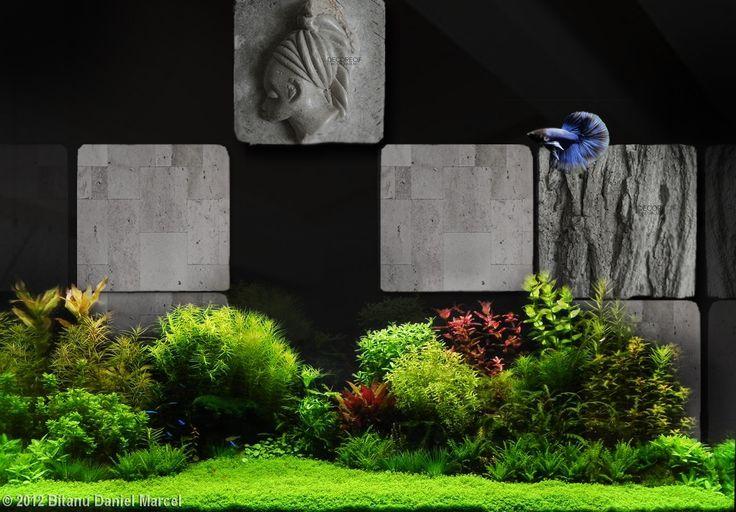 Galerie photo d coration original recif original recif for Bocal aquarium original