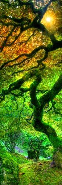 .Nature, Magic Wood, Beautiful, Trees, Japanese Gardens, Portland Japan, Places, Oregon Travel, Portland Oregon