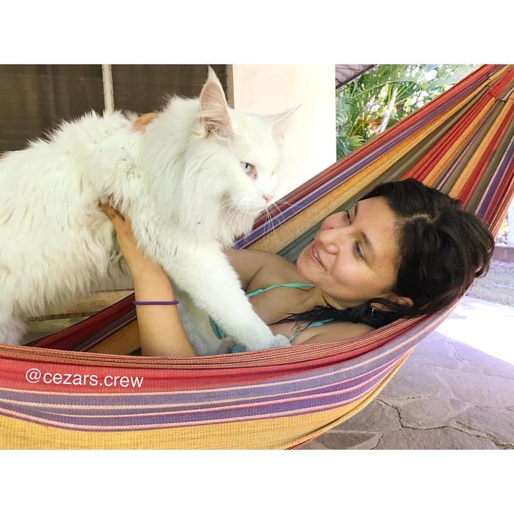 """658 Likes, 9 Comments - 🐾Cezar The Travelling Cat 🐈 (@cezars.crew) on Instagram: """"One of my first additional crew member! Let me introduce 'FAN OF THE WEEK' Laura @lauraestrada99…"""""""