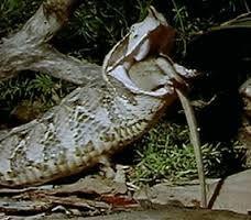 reptiles snakes - Google Search