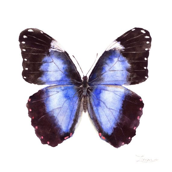 Watercolor blue butterfly Morpho achillaena. JPG downable and printable. Aquarelle realistic hand painting high resolution digital file by ZorrinaArt