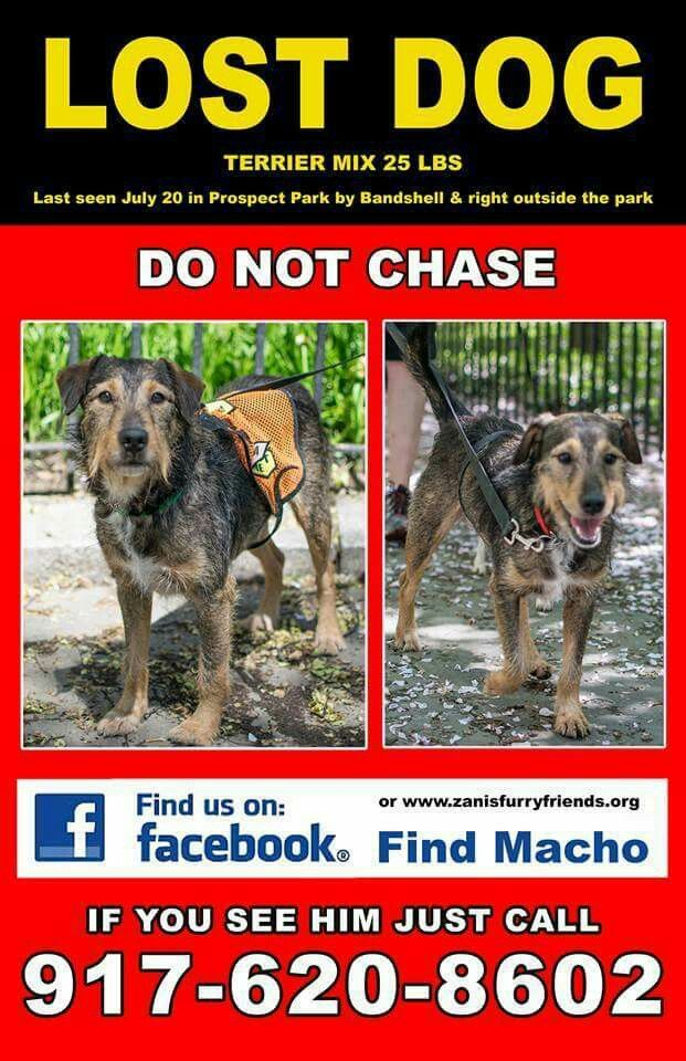 1378 best Lost and Found Pets images on Pinterest Blues, Dogs - lost dog flyer template word