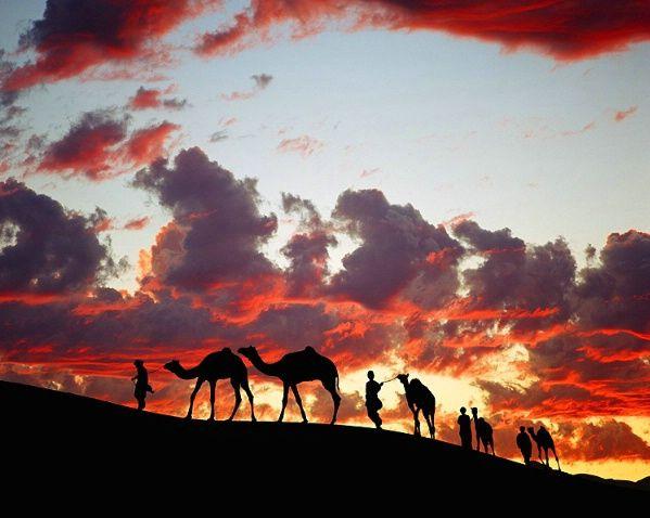 camel train in the Thar Desert  Rajasthan, India