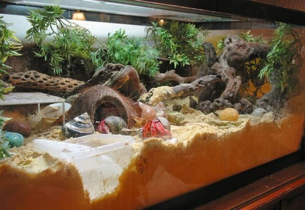 hermit crab habitat - Google Search