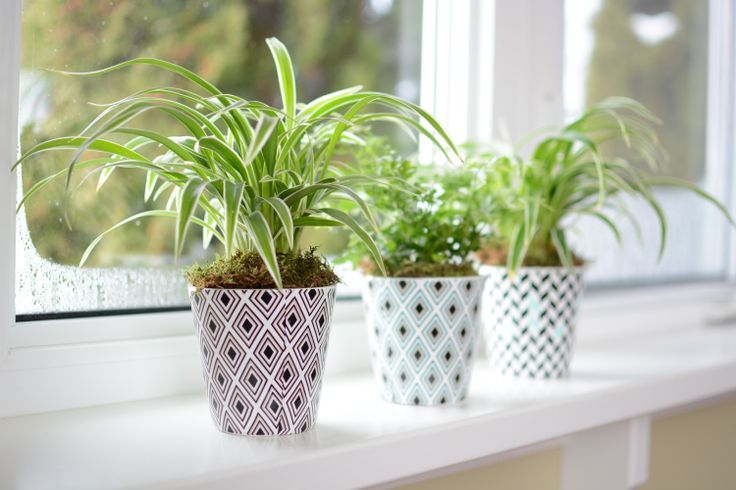 Did you know that plants have a positive effect on are mood.
