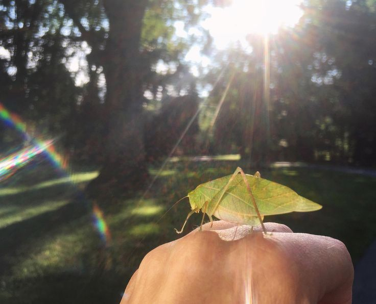 I found a Katydid before she went back to bed.