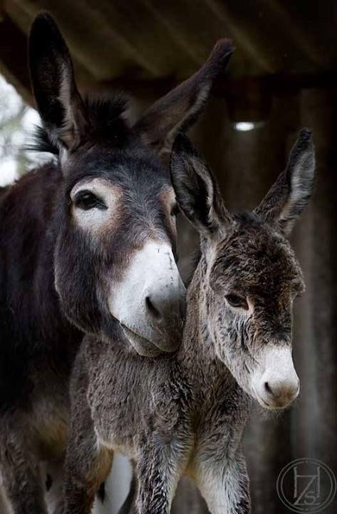 Donkey's.....