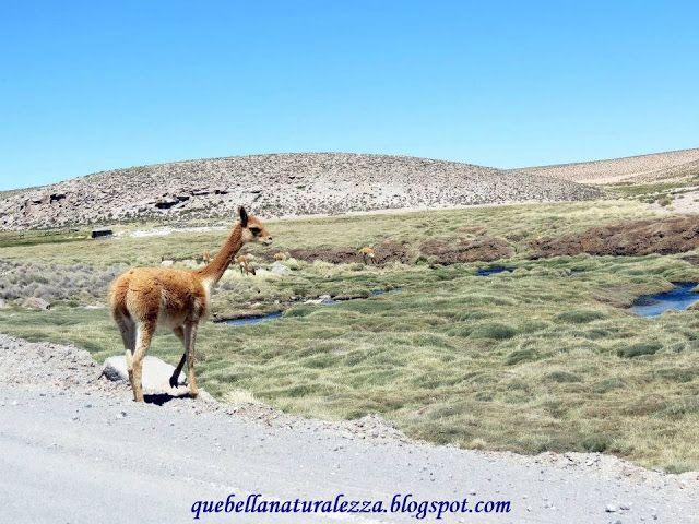 Parque Nacional Lauca, Arica, Chile QueBellaNaturaleza!
