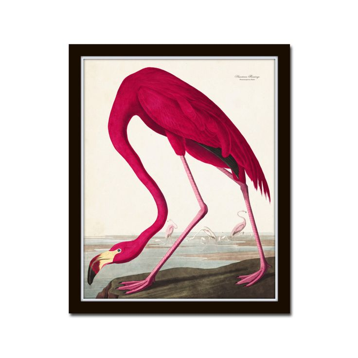 Vintage Audubon Pink Flamingo Bird Print, Giclee Art Print, Poster, Beach House Decor, Wall Hanging, Coastal Art, Audubon Bird Prints by BelleMerGraphics on Etsy https://www.etsy.com/listing/239663143/vintage-audubon-pink-flamingo-bird-print