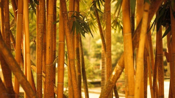 Бамбук-Обои для рабочего стола 1920x1080