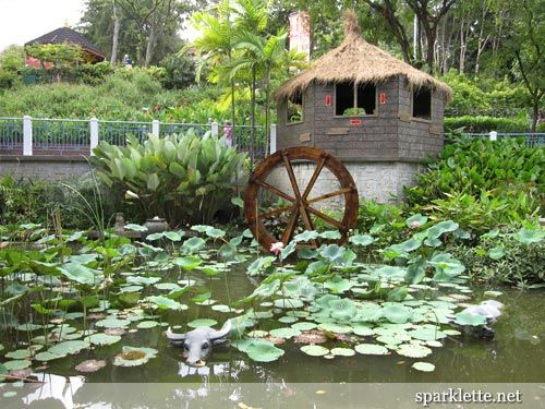 Fish In Backyard Pond Crossword : Ox, Ponds and Singapore on Pinterest