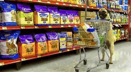 You push a buggy in the market. So if you're out buying your Heinz Ketchup or your Iron City from the supermarket, you'll be shopping with a buggy, not a shopping cart.