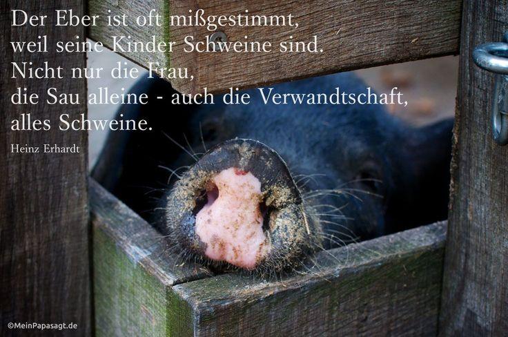 Mein Papa sagt... Der Eber ist oft mißgestimmt, weil seine Kinder Schweine sind. Nicht nur die Frau, die Sau alleine – auch die Verwandtschaft, alles Schweine.  Heinz Erhardt #Zitate #deutsch #quotes      Weisheiten & Zitate TÄGLICH NEU auf www.MeinPapasagt.de