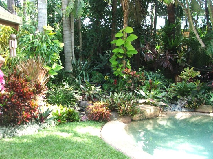 Garden Ideas Brisbane 175 best tropical gardening and landscaping ideas images on