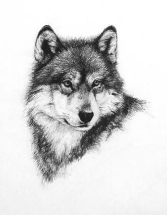 Wolf - http://www.heathertheurer.com