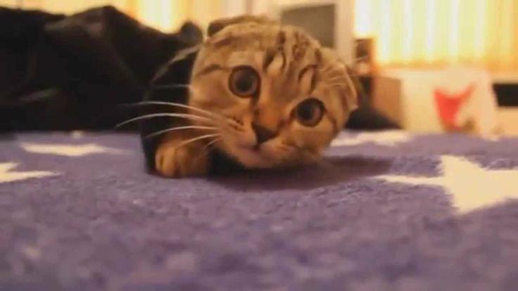 Funny Cat   Funny Cat Hiding ! HD
