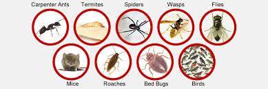 شركة مكافحة حشرات ينبع  https://www.prokr.net/ksa/yanbu-anti-insect/