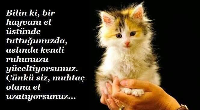 UNUTMAMAMIZ GEREKİR..!! #empatisev