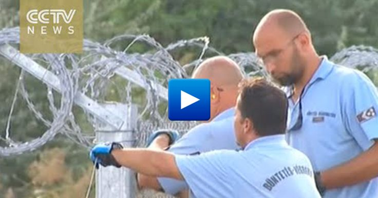 """SUPPORT ISRAEL: Hungary: """"Illegal Muslim immigrants will be caught..."""