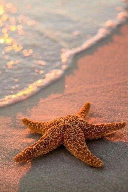 cute starfish near the shore