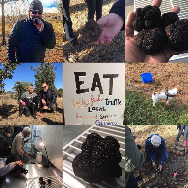 Amazing day hunting Truffles in Australia. In honour of the start of Truffle season we  went strait to the source with some of The Star chefs. Learned, hunted, dug and ate Truffles. It's Truffle Month at The Star and we are featuring them throughout all of our signature restaurants. Come on down and taste one of the rarest and most exotic flavours in the world! Fresh Australian Black Truffles!!! @chef_north1 @jason_alcock @vincent_l00 @thestarsydney #truffles #truffle #cheflife #australia…