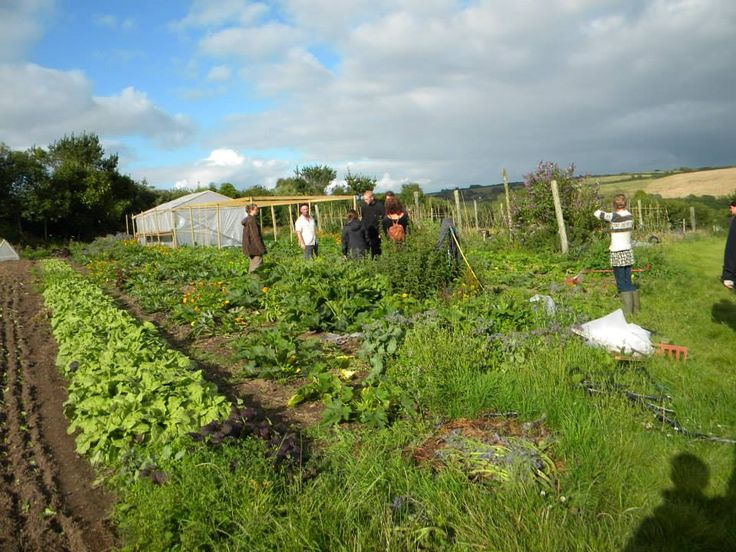 76 Best Permaculture Images On Pinterest | Permaculture Limousin And Organic