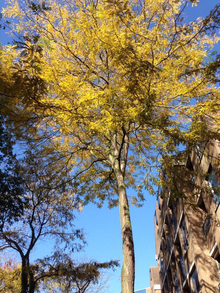 Tree db