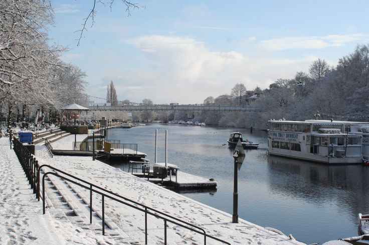 Chester in the snow.