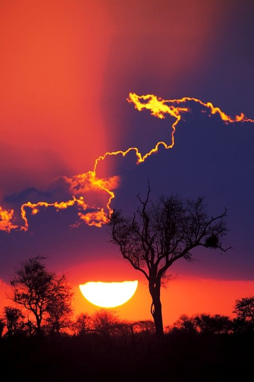 Sunset at Kruger National Park, South Africa ❁❁❁Thanks, Pinterest Pinners, for stopping