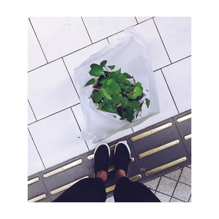 "Plant Stories Stockholm på Instagram: ""Morning glory!  #plantstories #delivery #morning #paprika #tomato #humle #eytys #aubergine #egg #plant #locallygrown #city #life #garden #balcony #grow #your #own #veggies #flower #inspo #interior #home #lovely #morning"""