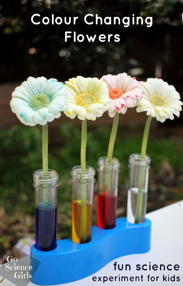 colour changing flowers - fun (and pretty!) science experiment for kids