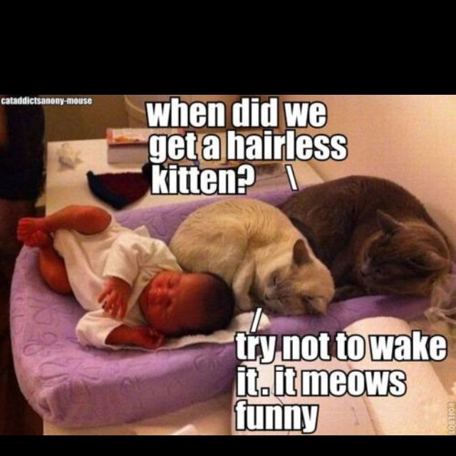 Funny Jokes About Hairless Cats