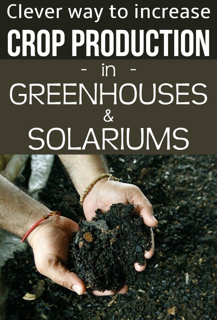 Clever way to increase crop production in greenhouses and solariums