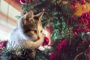 How to Keep a Cat Away From an Xmas Tree thumbnail
