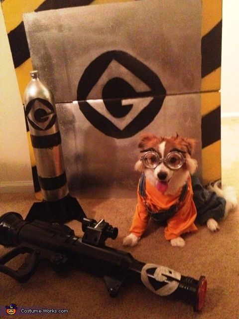 Despicable Me Minion - DIY Halloween Costume | A word from Jessica, the 'Despicable Me Minion' costume creator: My dog is named Mochi. He is a minion, so we made his costume. We bought him a shirt and overalls. We painted glasses silver to be his minion goggles.....