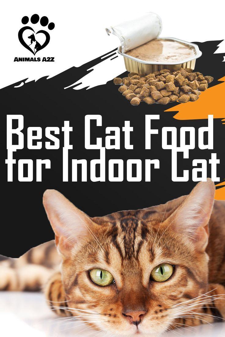 Best Cat Food For Indoor Cats Cat Facts In 2020 Best Cat Food Cat Nutrition Cat Food Brands