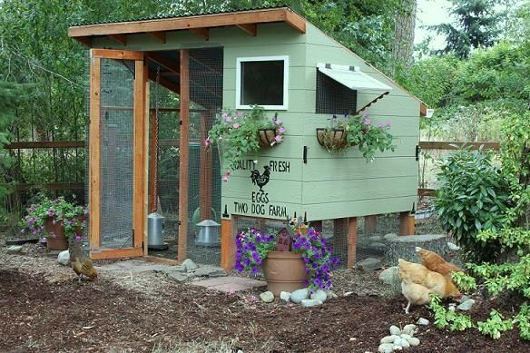 best chickens coops with walk in doors - Google Search