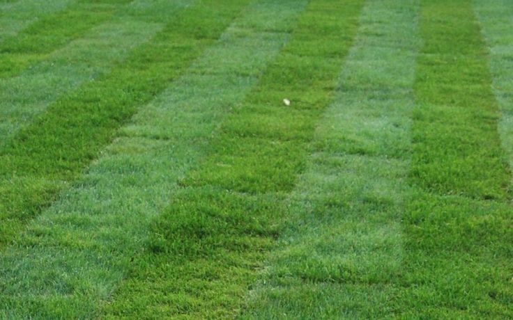 Рулонный газон — это газон, который выращивается в течение нескольких лет на специальных полях, затем срезается вместе со слоем почвы (2-3 см) в виде рулонов, стандартный размер которых имеет ширину 0,4 метра и длину 2 метра. Существует несколько видов рулонного газона — эконом, стандартный, спортивный, элитный. Они отличаются сортами используемых трав и соответственно цветом, шириной листовой пластины, степенью вытаптываемости и ценой.