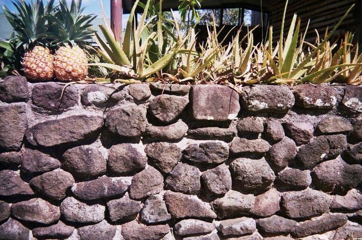 Pineapples, Nananu-I-Ra, Fiji. 35mm Film.