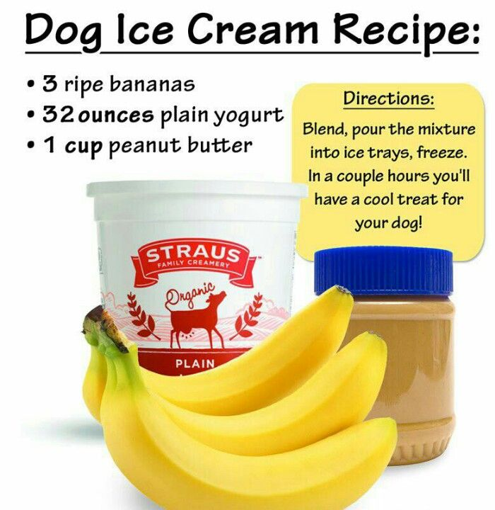 Treats for Your Dog/Dogs.